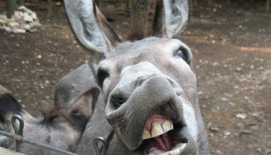 Is your cloud a Racehorse or a bit of a Donkey? - Fedr8